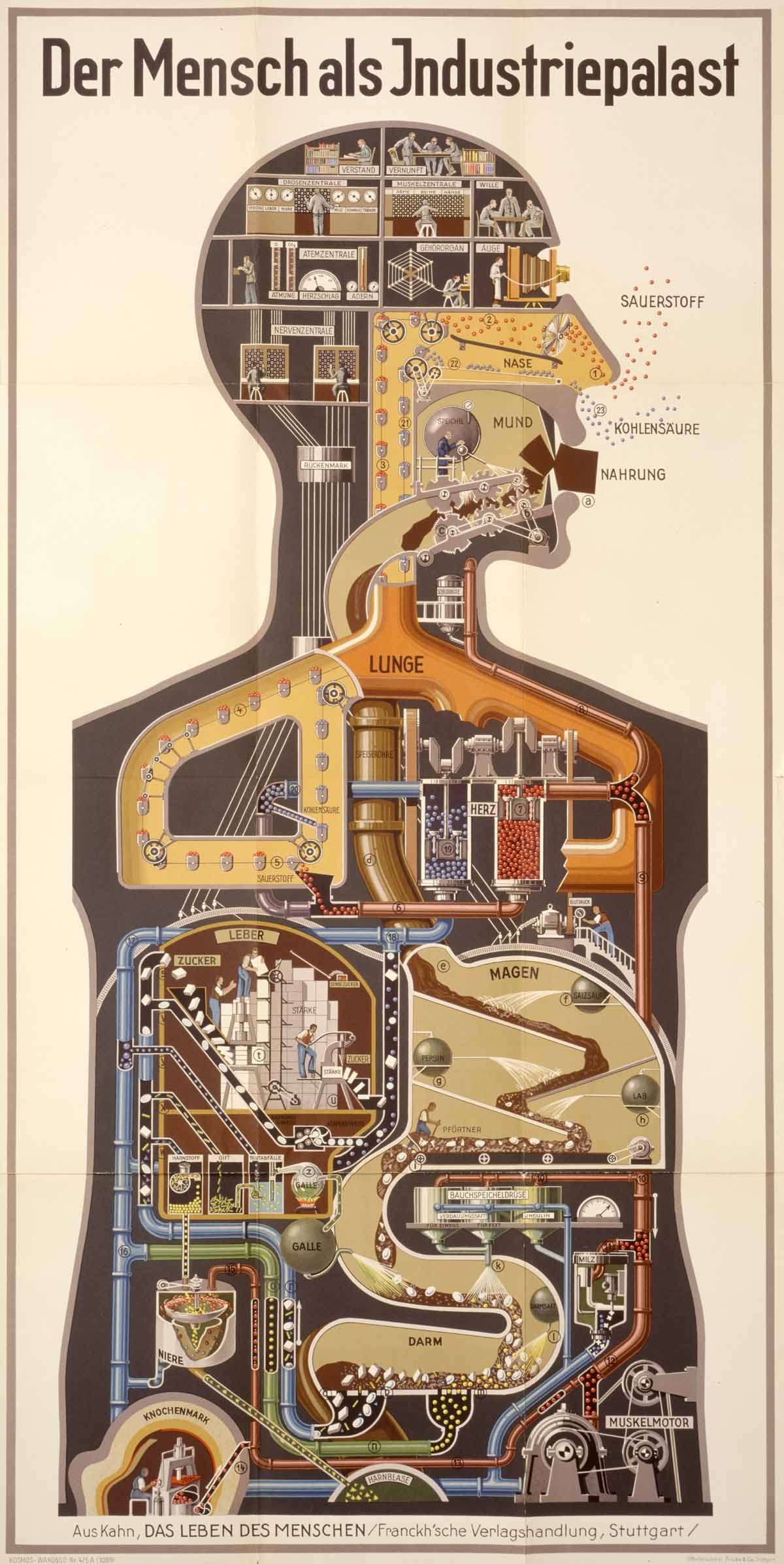 Der Mensch als Industriepalast by Fritz Kahn